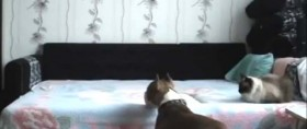 video-cane-letto
