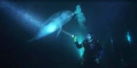 video-delfino-sub